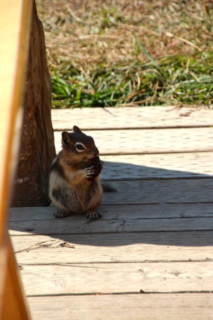 und in Kanada sitzt ein Erdhörnchen auf unserer Terrasse