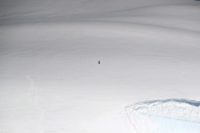 Pinguin ganz allein auf einem riesigen Eisberg in der Antarktis