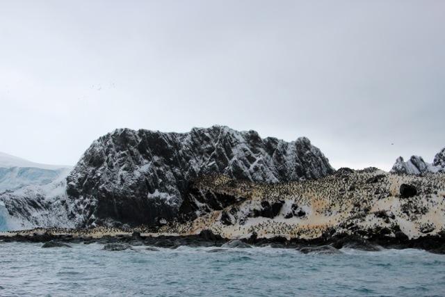 die Pinguine auf Elephant Island retten schon Menschenleben –als Futter