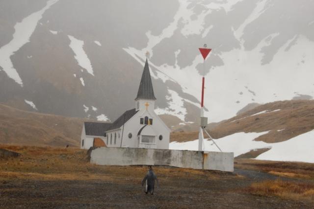 Grytviken: ein Pinguin ist auf dem Weg zur Kirche