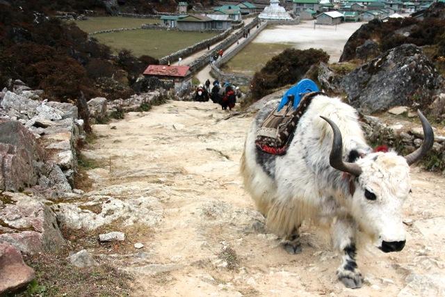 Nepal_Trekking_Himalaya_pushreset