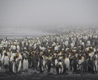 Salisbury_Plain_Pinguine_im_Nebel