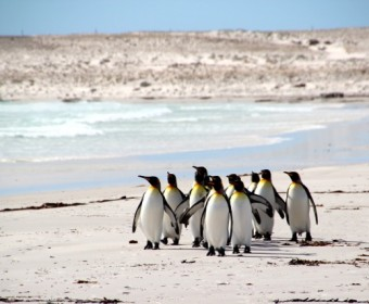 Volunteer_Beach_Pinguine_pushreset