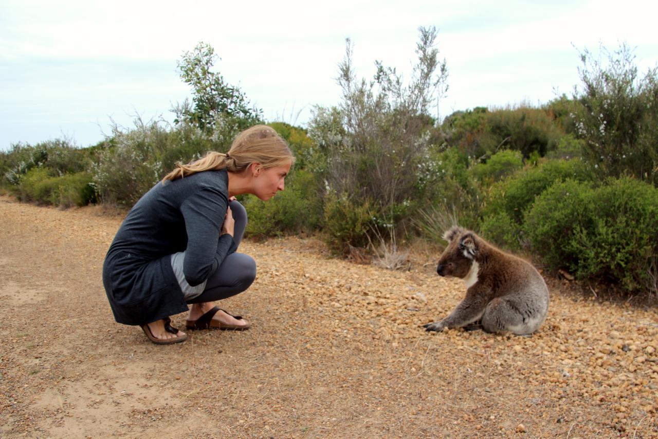 auf Kangaroo Island retten wir einen Koala vom Strassenrand