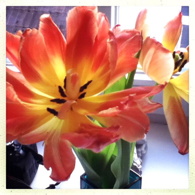 Frühling für zu Hause