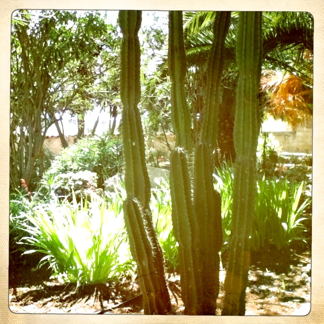 Garten mit Kakteen und Palmen