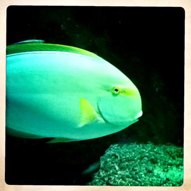 bunter Fisch im Aquarium