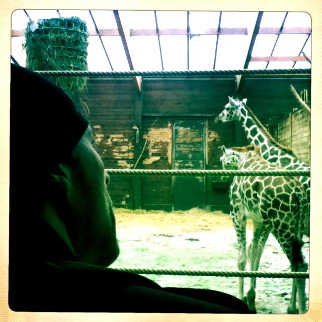 Dirk bestaun die Giraffen