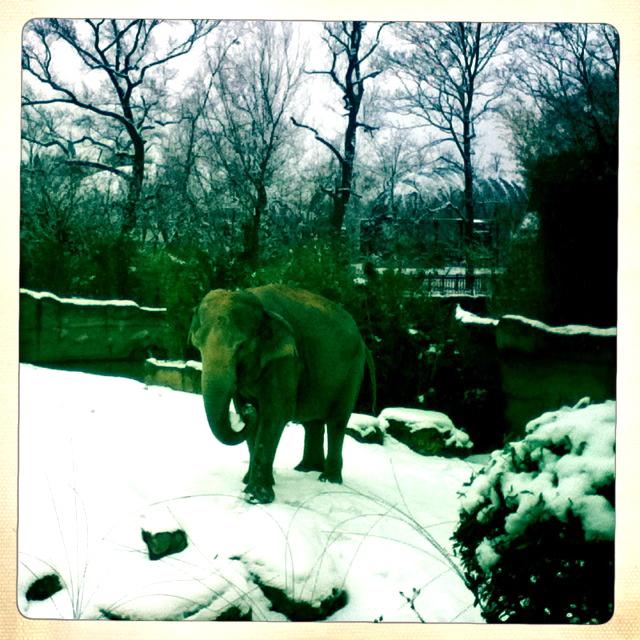 seltener Anblick: Elefant im Schnee