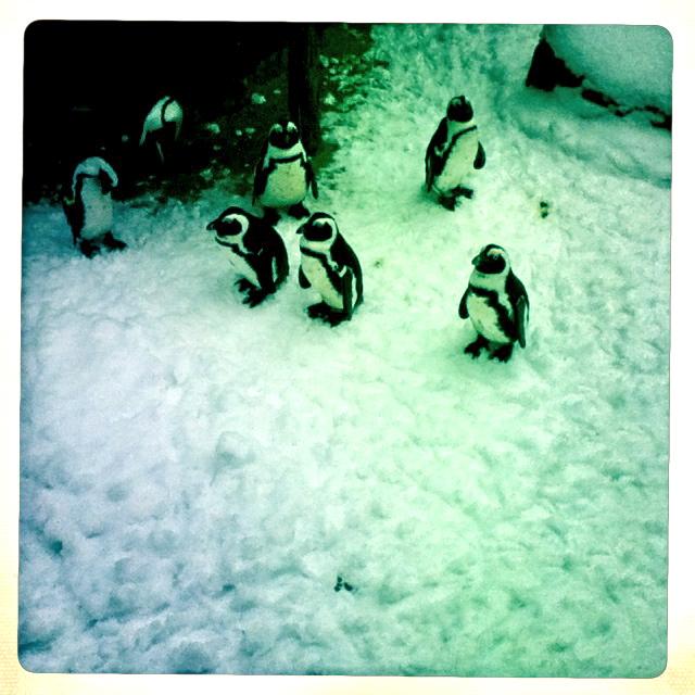 die Pinguine freuen sich über den Schnee