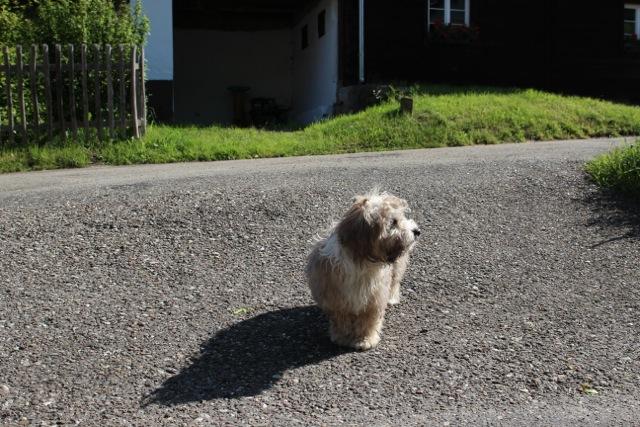 der Hund nutzt die Strasse natürlich auch