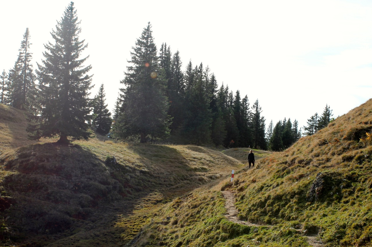Abstieg vom Gierenkopf