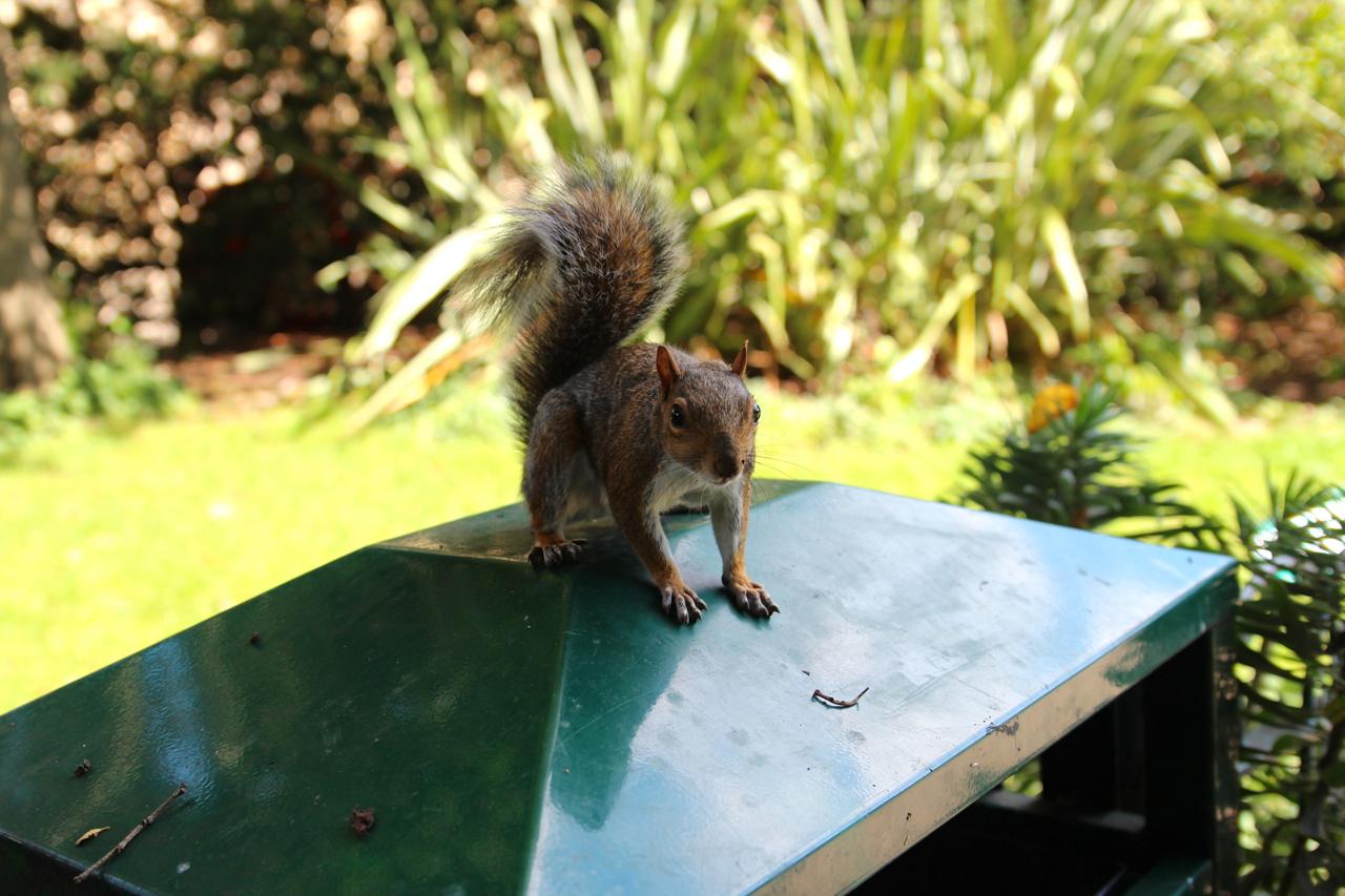 ein Eichhörnchen begutachtet uns neugierig