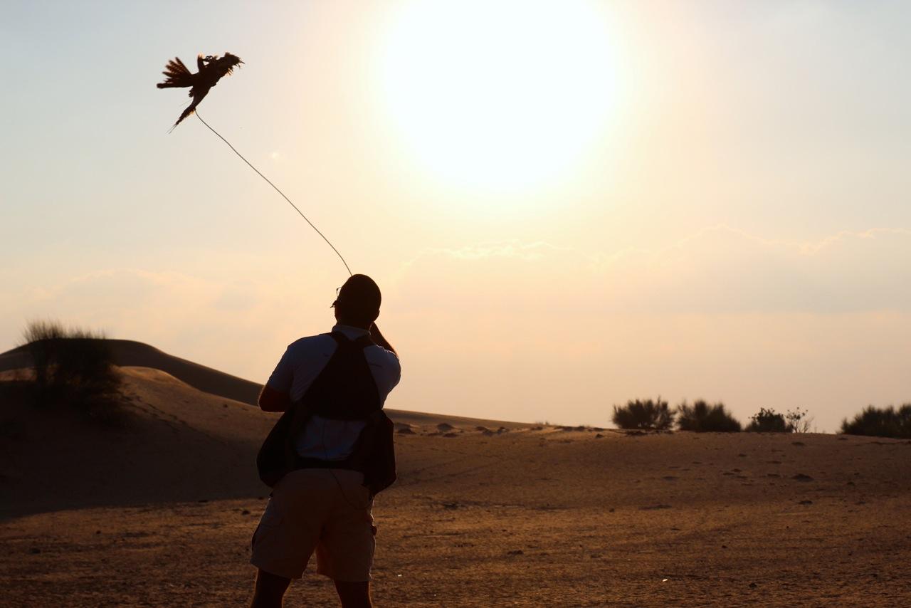 geschafft – der Falke fängt den Köder in der Luft