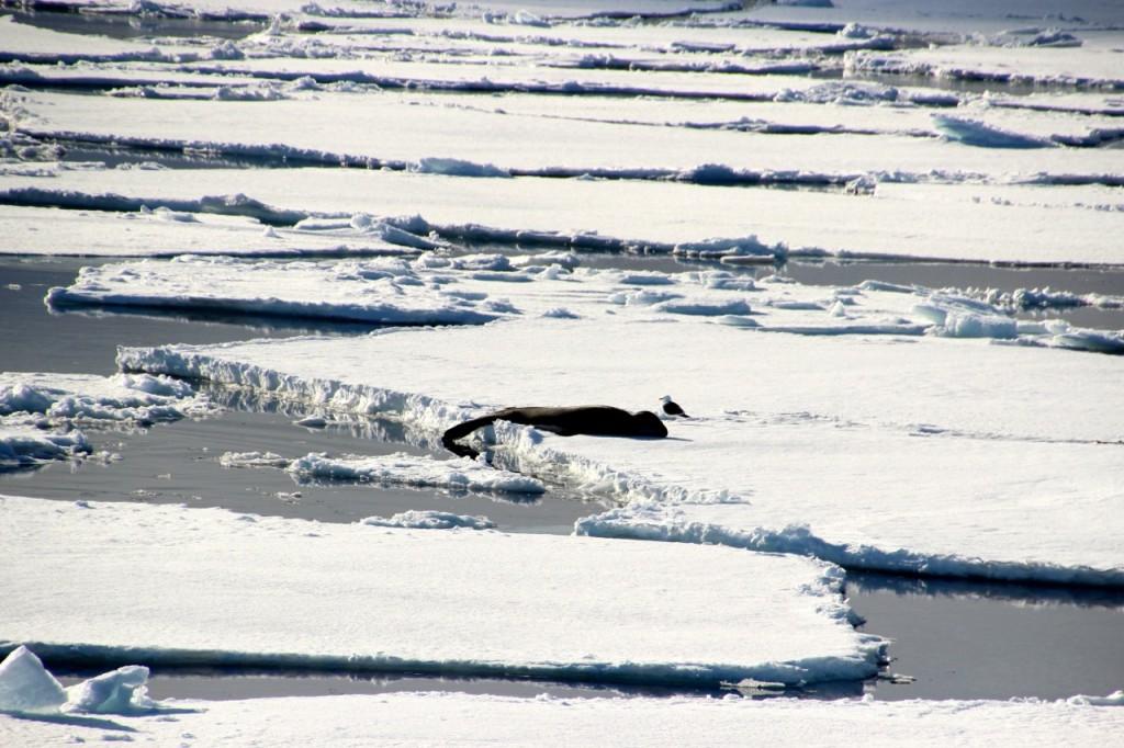 die Robbe und der Vogel lassen sich von uns nicht stören
