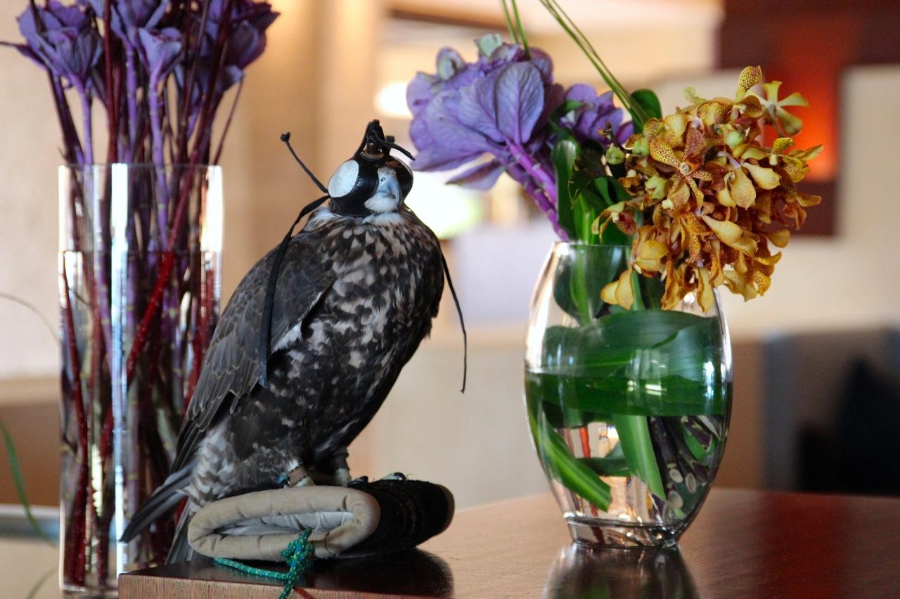 Falke in der Lobby