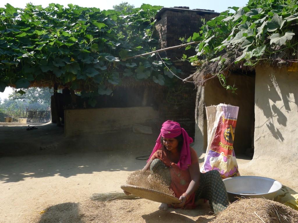 Frau siebt Reis im Dorf
