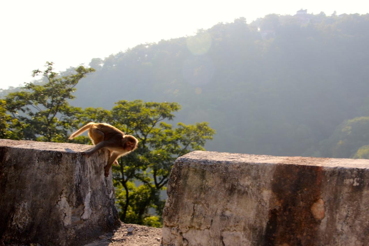 ein Affe springt am Strassenrand umher