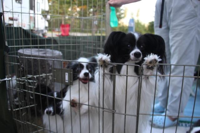 Brendas Hunde treffen wir am Southpark Campground