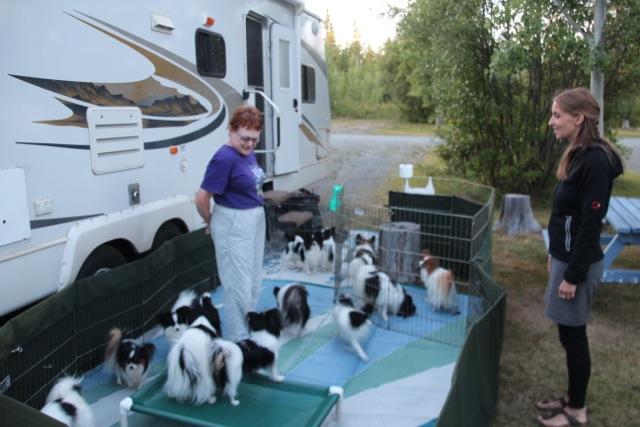Brendas Hunde haben schon einige Preise gewonnen