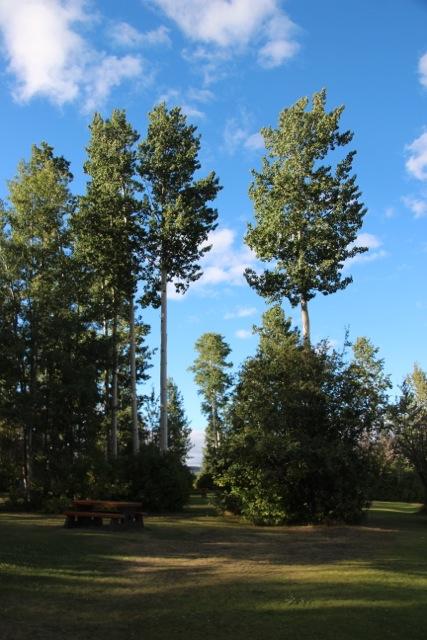 Hohe Bäume am Tyhee Lake/
