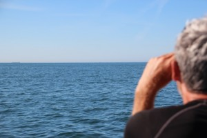 Dirk sucht den Estuario nach Delfinen ab