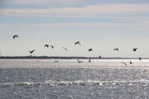 Möwen segeln einem Kutter hinterher