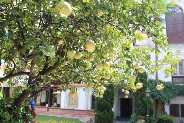 Der Garten unseres Hotels: mit reifen Pomelos am Baum und Affen-Besuch