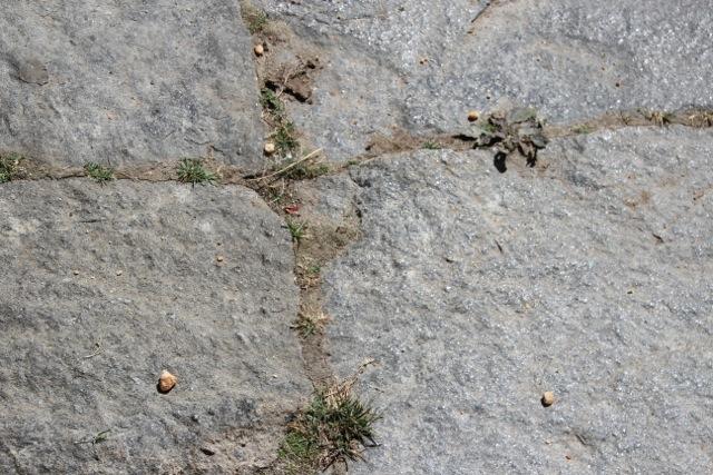 – der Mönch füttert die Ameisen