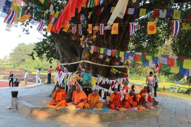 Mönche unter einem Bodhi-Baum in Lumbini