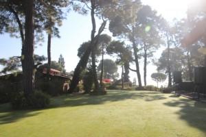 Resort unter hohen Bäumen