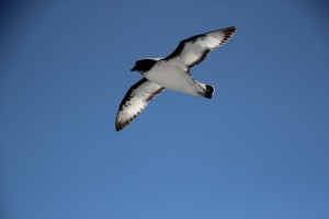 Sturmvögel begleiten das Schiff