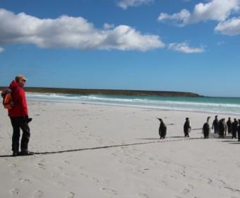 auch Pinguine sind sehr neugierig