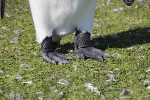 wie Gamaschen sehen die Füße aus