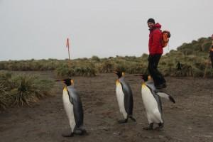 Frackträger und Rotjacken: Immer wieder kommen sich Pinguine und Passagiere nahe