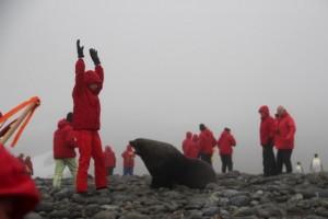 Seebären warten auf Weibchen und werden da schon mal angriffslustig