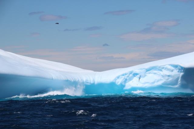 die Vögel wirken winzig, die um den Eisberg herumfliegen