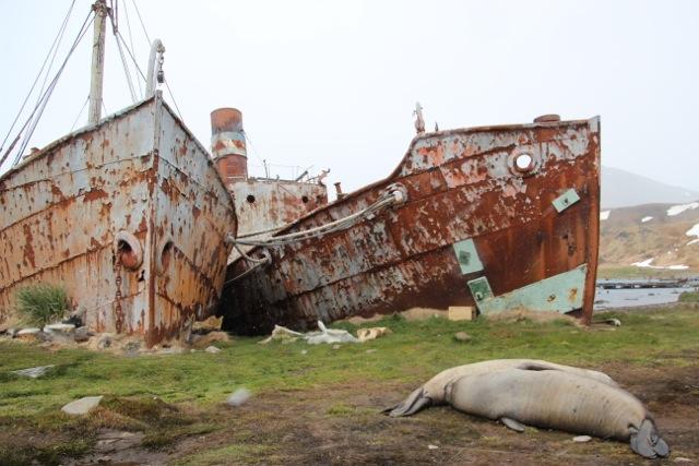 Die Walfangstation Grytviken in Südgeorgien verfällt