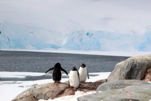die Pinguine fühlen sich hier sicher und vermehren sich ordentlich