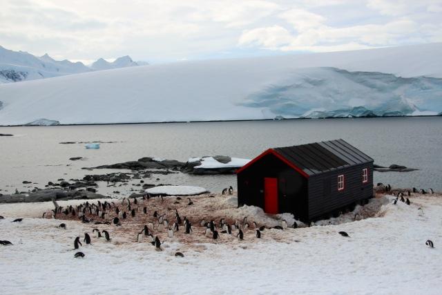 Pinguin-Kolonie auf Port Lockroy