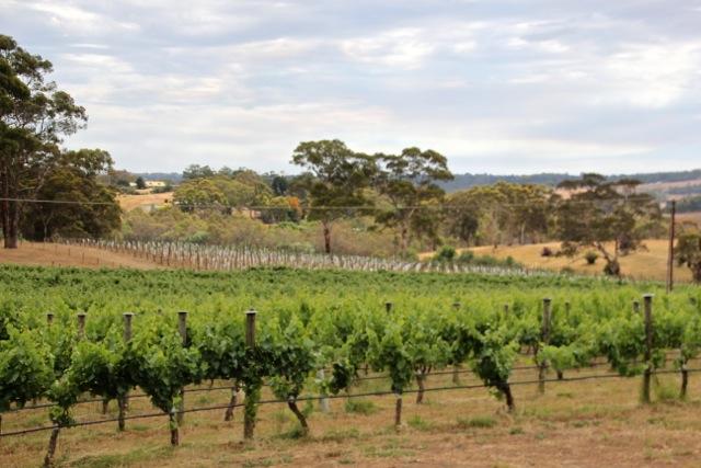Wein in den Adelaide Hills