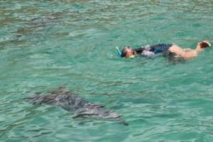 Dirk und Delfin sind gleichermaßen neugierig  aufeinander