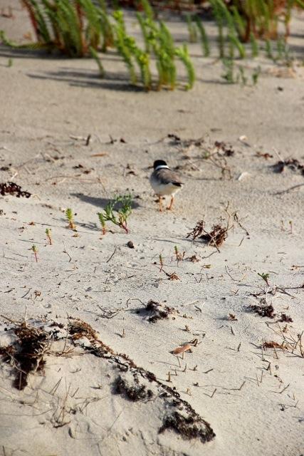 beliebt ist der Strand auch bei Vögeln