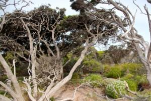 Bäume haben sich dem Wind gebeugt