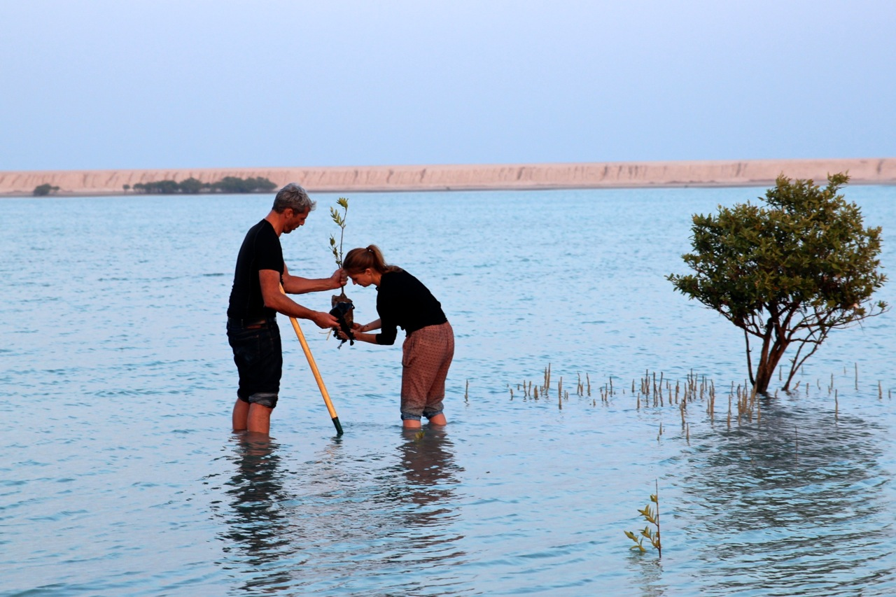 Susanne und Dirk pflanzen Mangroven in den schlammigen Untergrund