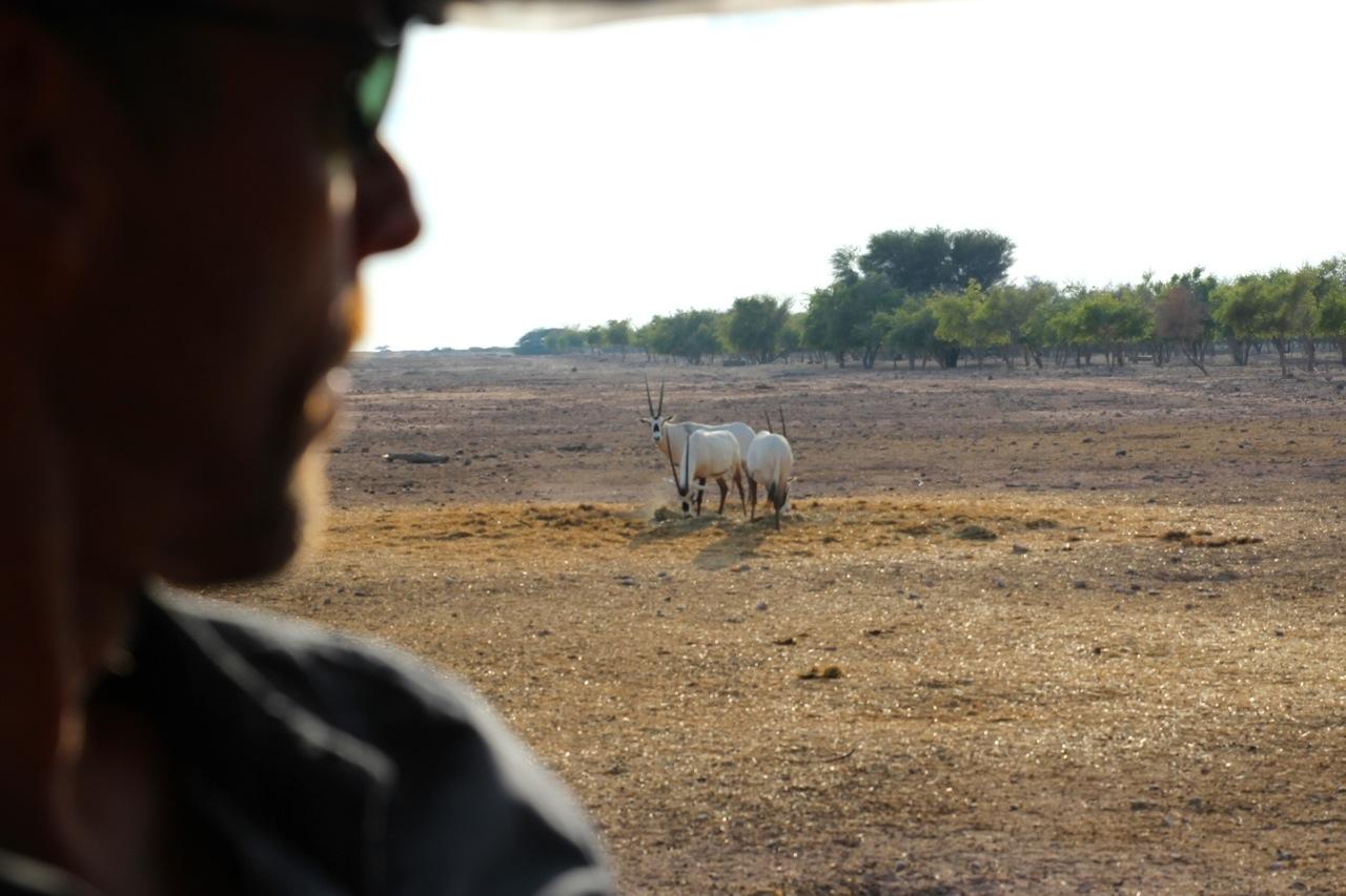 Dirk blickt auf eine Herde von Gazellen