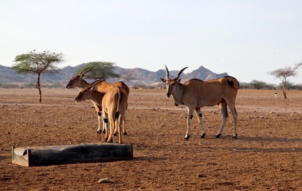 Sir_Bani_Yas_Safari_Herde_pushreset
