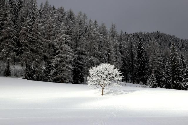 ein letzter Lichtstrahl erhellt den Baum., bevor die Wolkendecke sich wieder schließt
