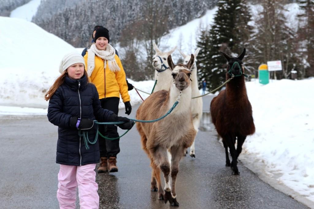 "Benita geht mit dem Lama ""Gassi"""