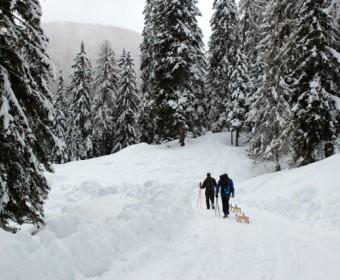 Kärnten_Wanderung_Waldpushreset